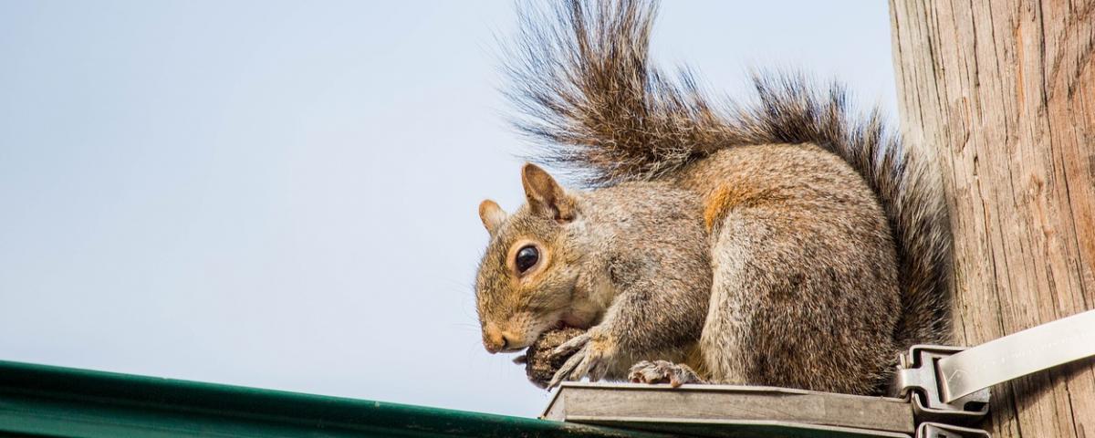 Hova tűntek a mókusok?